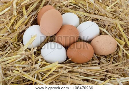 Eggs In The Nest, White And Brown Eggs