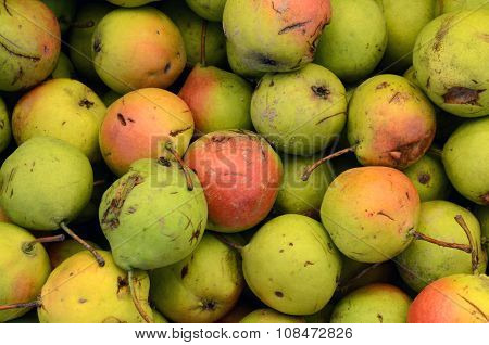 Pure Organic Rare Variety Pear