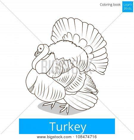 Turkey learn birds coloring book vector