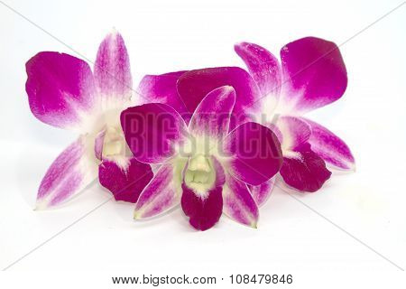 Purple Orchids On A White Background