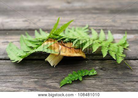 Porchino Mashroom Under Green Fern Leave On Wooden Table