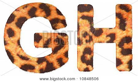Leopard Fur G And H Letters Isolated