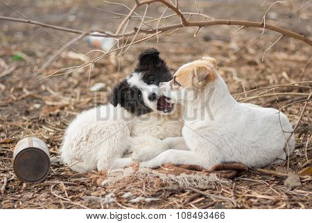 Two adorable mixed breed stray puppies