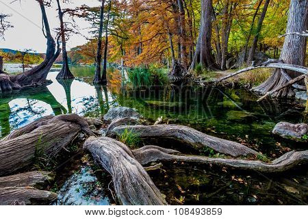 Gnarly Roots and Fall Colors at Garner State Park, Texas