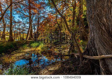 Beautiful Fall Colors at Garner State Park, Texas