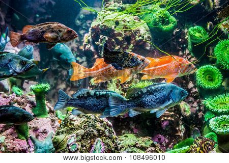 Several Interesting Colorful Grouper-like Marine Fish.