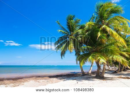 Untouched tropical beach with palm trees in Dominican Republic