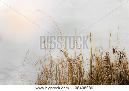 Dry Grass On Background Of Ice