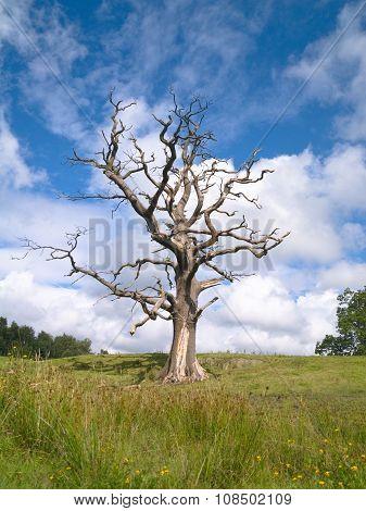 lonely spooky dead tree in a green field