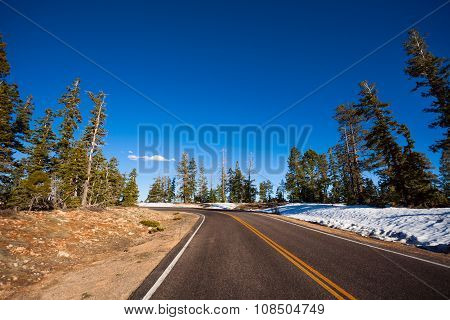 Road in Bruce canyon national park with fir trees