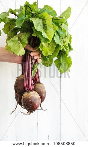 Bunch of fresh garden beetroot kept in man's hand, white wooden backdrop.