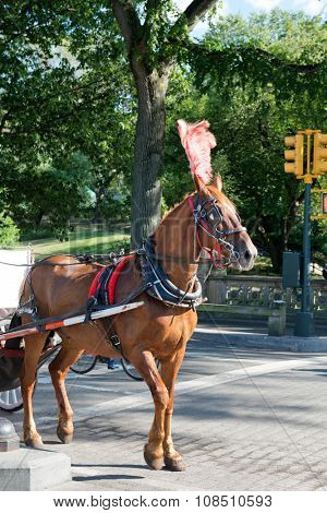 Brown Horse Wearing Harness and Feather Headdress Pulling Wagon Through Central Park, New York City, New York, USA