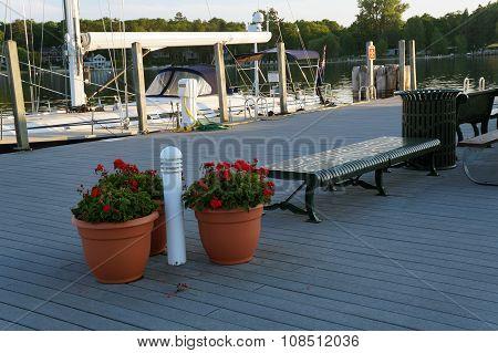 Gladiolas on the Dock