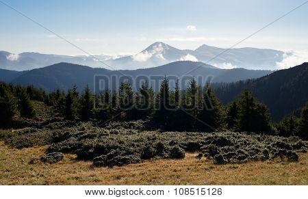 Mountain landscape. Autumn morning. Spruce forest in the hills. Carpathians, Ukraine, Europe