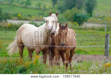horses in a paddock