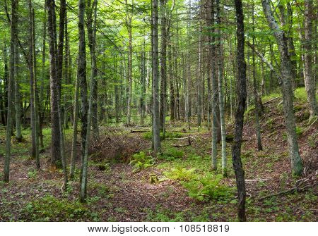 green forest ecosystem
