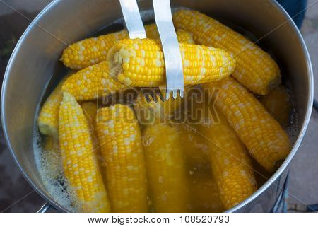 corn on cob cooking