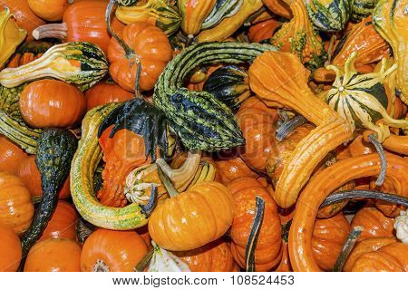 Orange Green Yellow Gourds Calabash Pumpkins