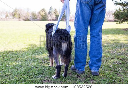 Injured Dog Walks In Sling Behind