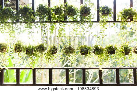 Beautiful Hanging Green Plant On Light Background