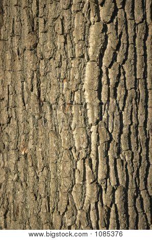 Corteza de los árboles
