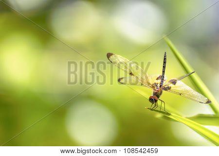 The Dragonfly Sitting On Green Leaf