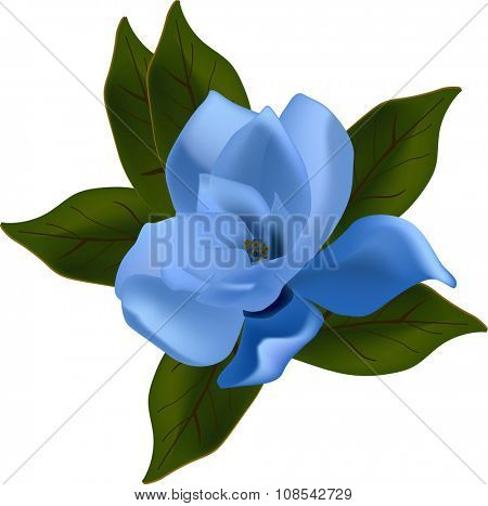 illustration with blue magnolia flower isolated on white background