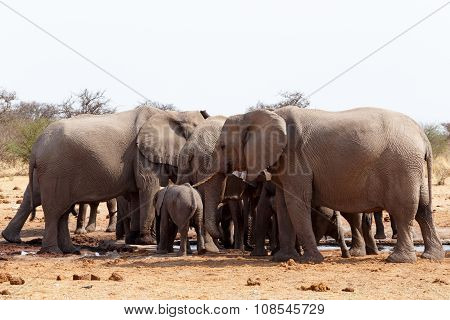 Herd Of African Elephants At A Waterhole