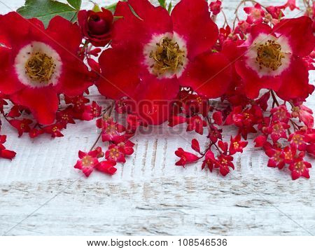 Vibrant Red Single Flowered Roses And Heuchera Flowers