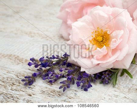 Pale Pink Roses And Provence Lavender