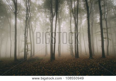 Symmetrical tree in forest with fog
