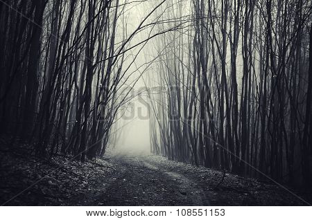 Path in dark mysterious forest
