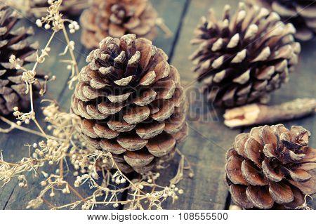 Pine Cone, Christmas, Pinecone, Xmas