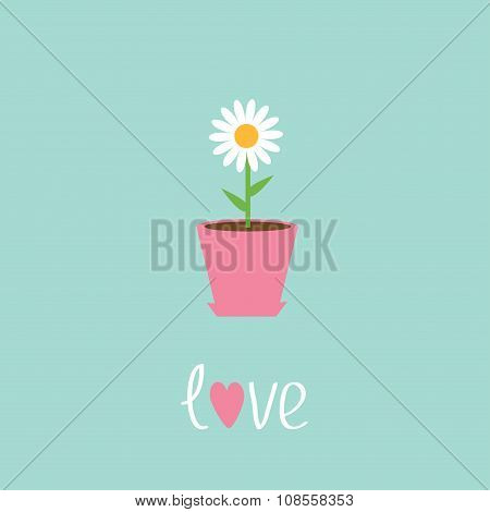Daisy In Pot. Love Card.