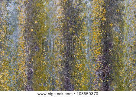 background rock moss texture