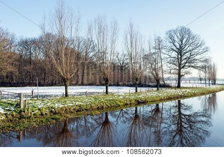 Reflected Row Of Bare Trees In Wintertime