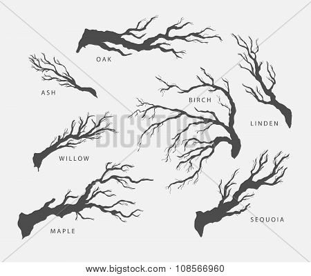 set of branches, twigs of different trees