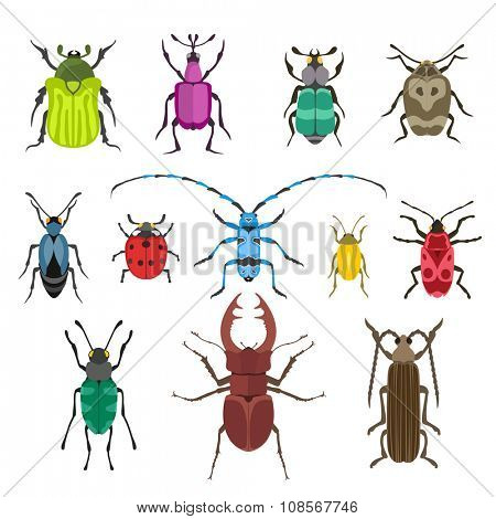 Colorful insects vector collection. Insects biology natural isolated on white background. Insects isolated illustration. Insects vector icons. Fly insects micro view vector. Bugs insects silhouette