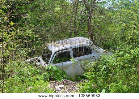 cars in the bush