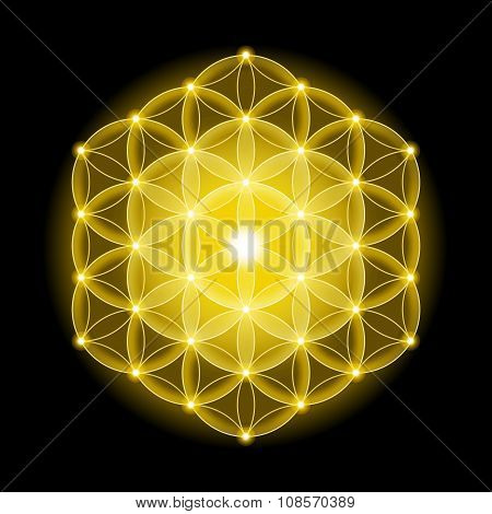 Golden Cosmic Flower of Life With Stars on Black Background