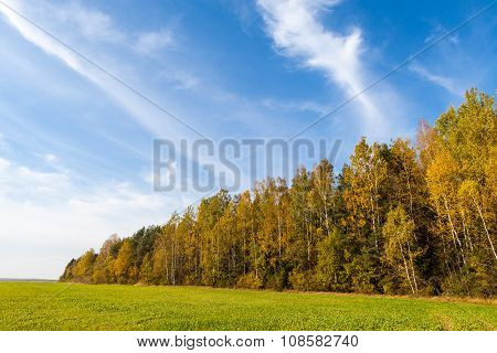 Sown agricultural green field in front of autumn forest and blue cloudy sky in autumn