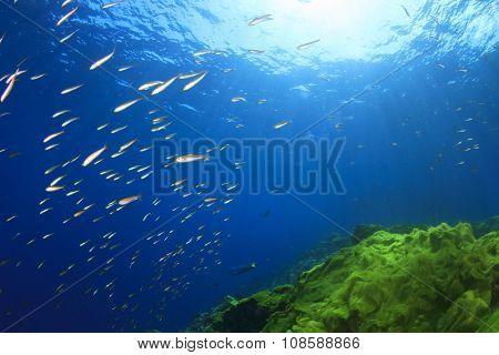 Coral Reef and Tropical Fish underwater in ocean