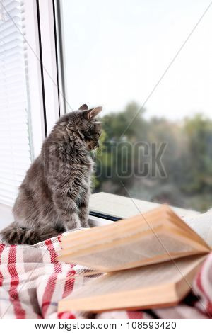 Beautiful grey cat sitting on blanket with book near window, close up