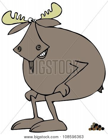 Moose squatting to poop