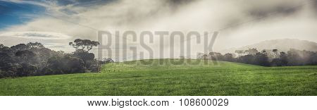 Foggy morning at Horton Plains. Panorama