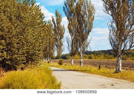 Earth Road And Poplar. Fall