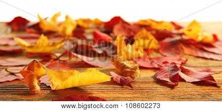 Red and yellow autumn leaves on wooden table in the studio