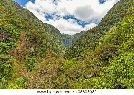 Tropical Environment