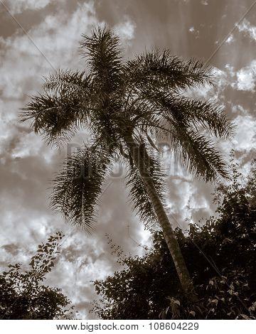 Trees And Sky At Iguazu Park