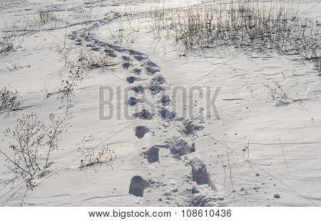 path on a fresh snow
